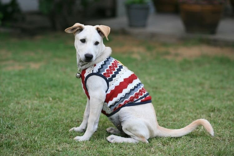 The Best Large Dog Sweaters