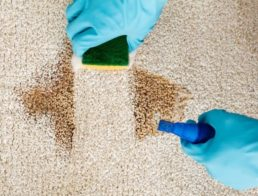 The Best Pet Carpet Cleaners