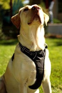 Apenglow Solutions No Pull No Choke Dog Vest Harness