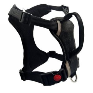 Lily Valley Best Front Range Dog Harness