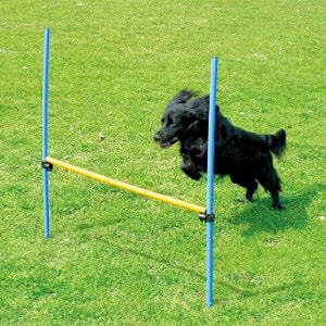 Pawise Dogs Outdoor Games Agility Exercise Training Equipment Hurdle