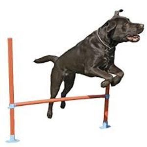 Rosewood Pet Agility Hurdle