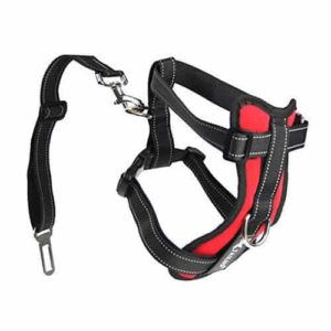 Tail Up Dog Car Harness