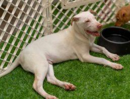 The Best Dog and Puppy Indoor Playpens