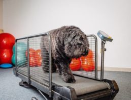 The Best Dog Treadmills