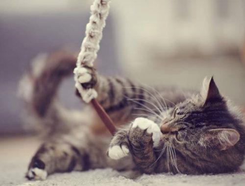 The Best Interactive Cat Toys