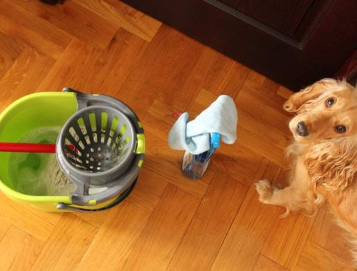 Dog and house cleaning equipment