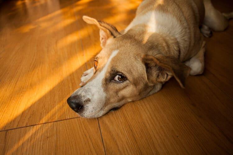 Dog with stinky ears