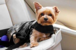 Mrli Pet Doggy Car Headrest Restraint