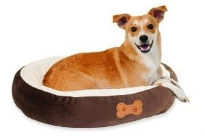 Aspen Pet Oval with Bone Applique