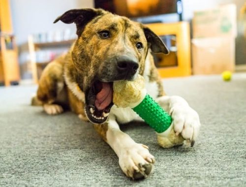 The Best Dog Chew Toys