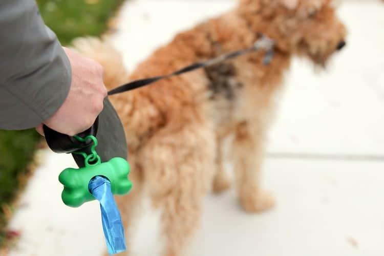 dog waste disposal bags