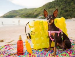 The Best Dog Sunscreen