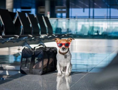 The Best Dog Travel Bags