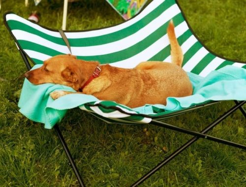 The Best Dog Travel Beds