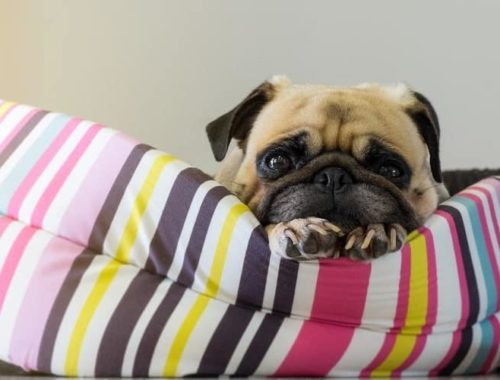 The Best Small Dog Beds