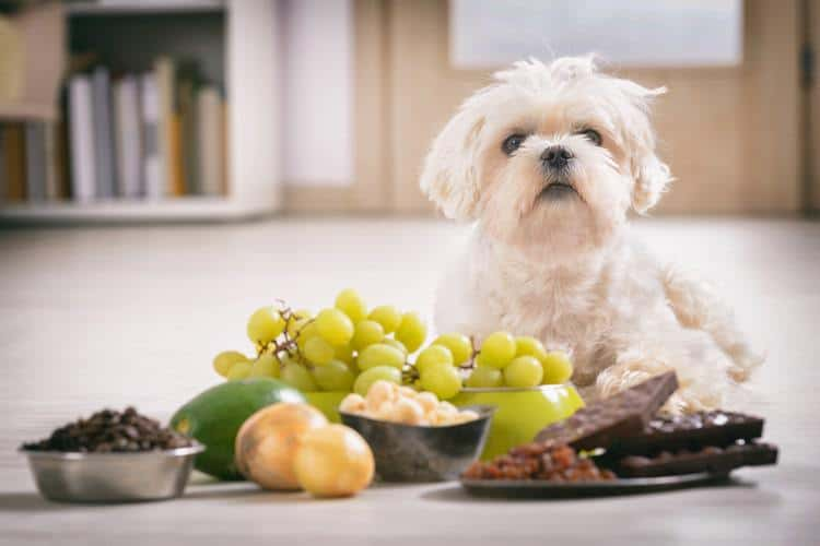 Dog and Toxic Foods