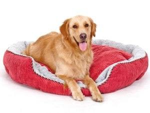PLS Pet Snugg Bolster Self-Warming Dog Bed