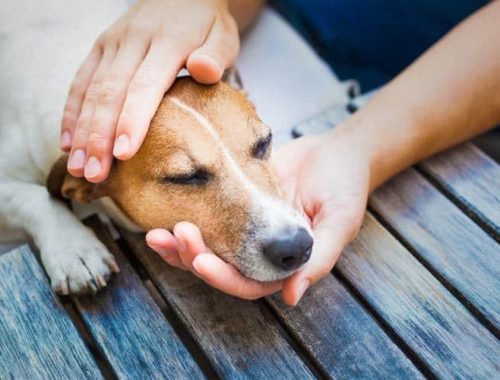 Person petting a dog in pain