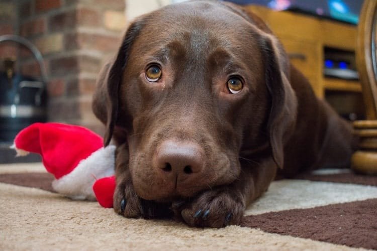 The Best Christmas Dog Toys