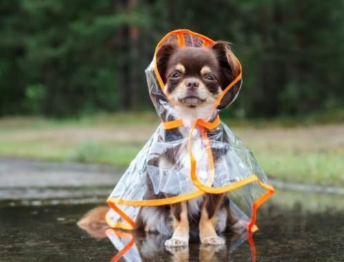 The Best Dog Raincoats