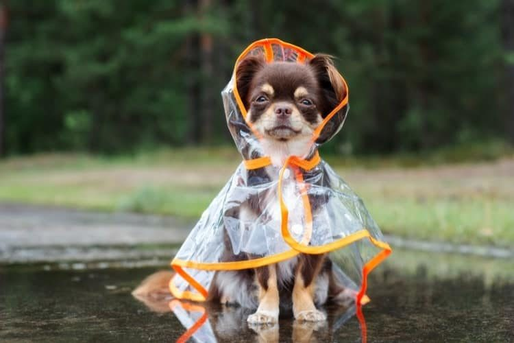 5f09f6a71b7d The 25 Best Dog Raincoats of 2019 - Pet Life Today