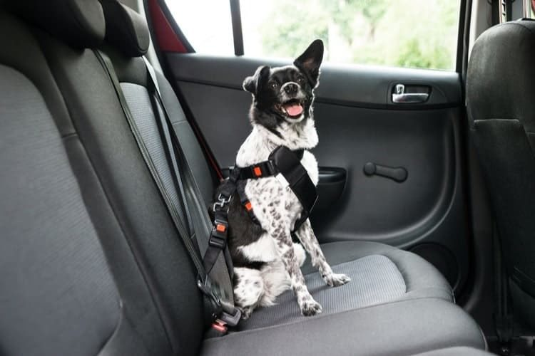 The Best Dog Seat Belts