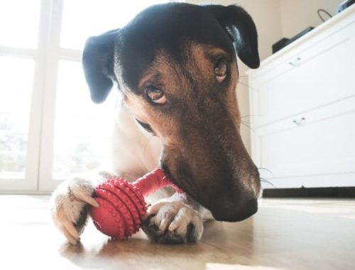 The Best Indestructible Dog Toys