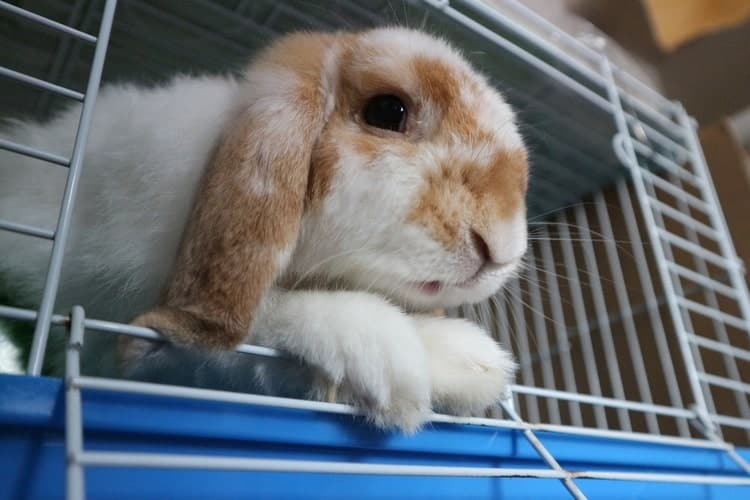 The Best Indoor Rabbit Cages