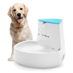 isYoung Dog Water Fountain