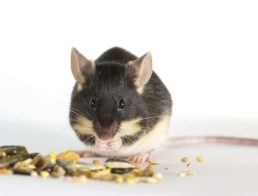 How to Take Care of a Mouse