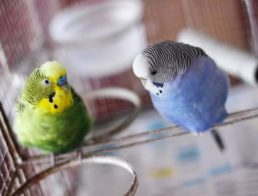 How to Take Care of a Parakeet
