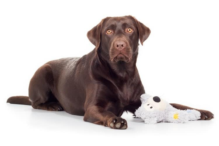The Best Stuffed Dog Toys