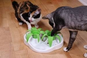 Aikiou Slow Feeder Cat Bowl