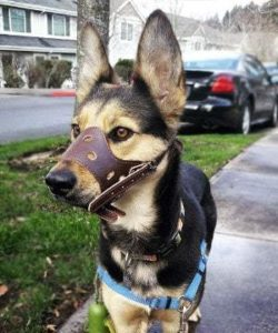 Barkless Dog Muzzle