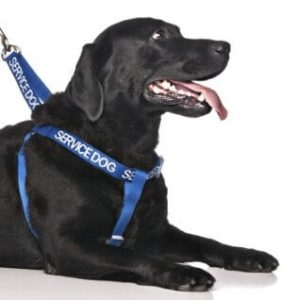Dexil Limited Service Dog Blue Color Coded Harness