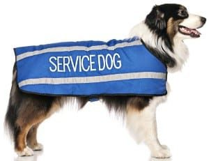 Dexil SERVICE DOG Blue Warm Dog Coats