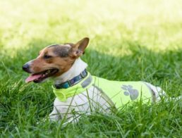 The Best Dog Anxiety Vests
