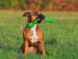 The Best Dog Ball Launchers