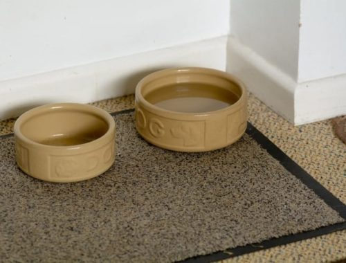 The Best Dog Feeding Mats