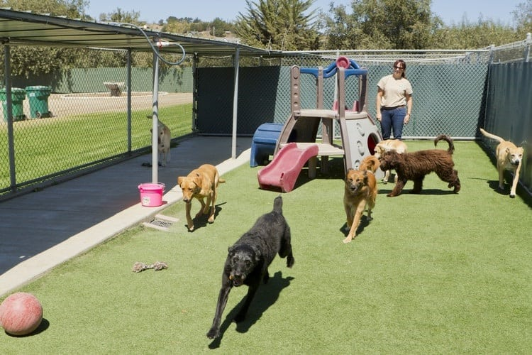 The Best Dog Kennel Covers