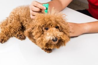 The Best Flea Medicine for Dogs​​​​​​​