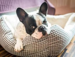 The Best Heated Dog Beds