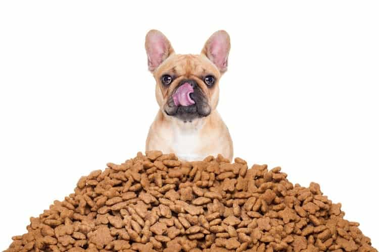 How Much Should I Feed My Dog?