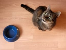 How Often Should I Feed My Cat?