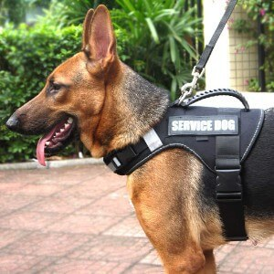 Misthis No Pull Service Vest Dog Harness