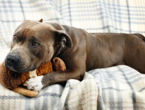 The Best Plush Dog Toys