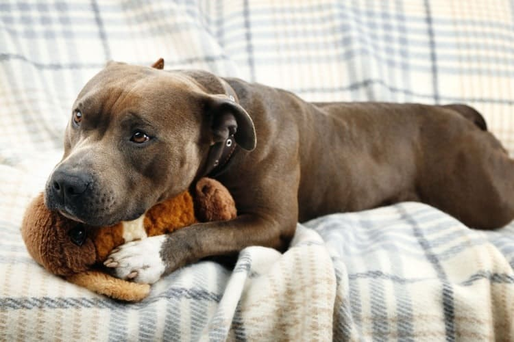 The Best Plush Dog Toys
