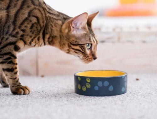 The Best Cat Bowls
