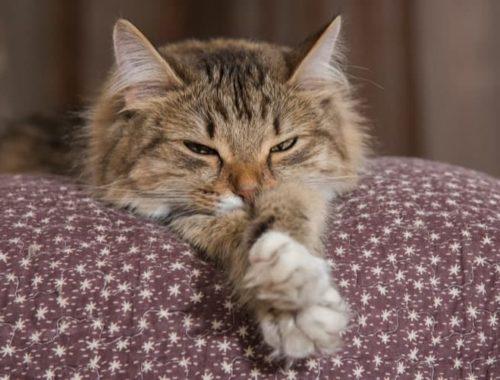 The Best Cat Pheromone Sprays